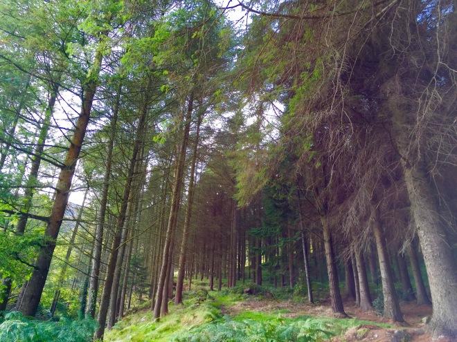 Slieve Foye Woods