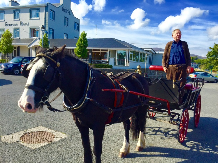 Smokey the horse in Omeath