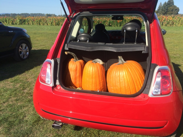 Some of our pumpkin haul in my Fiat 500 rental car