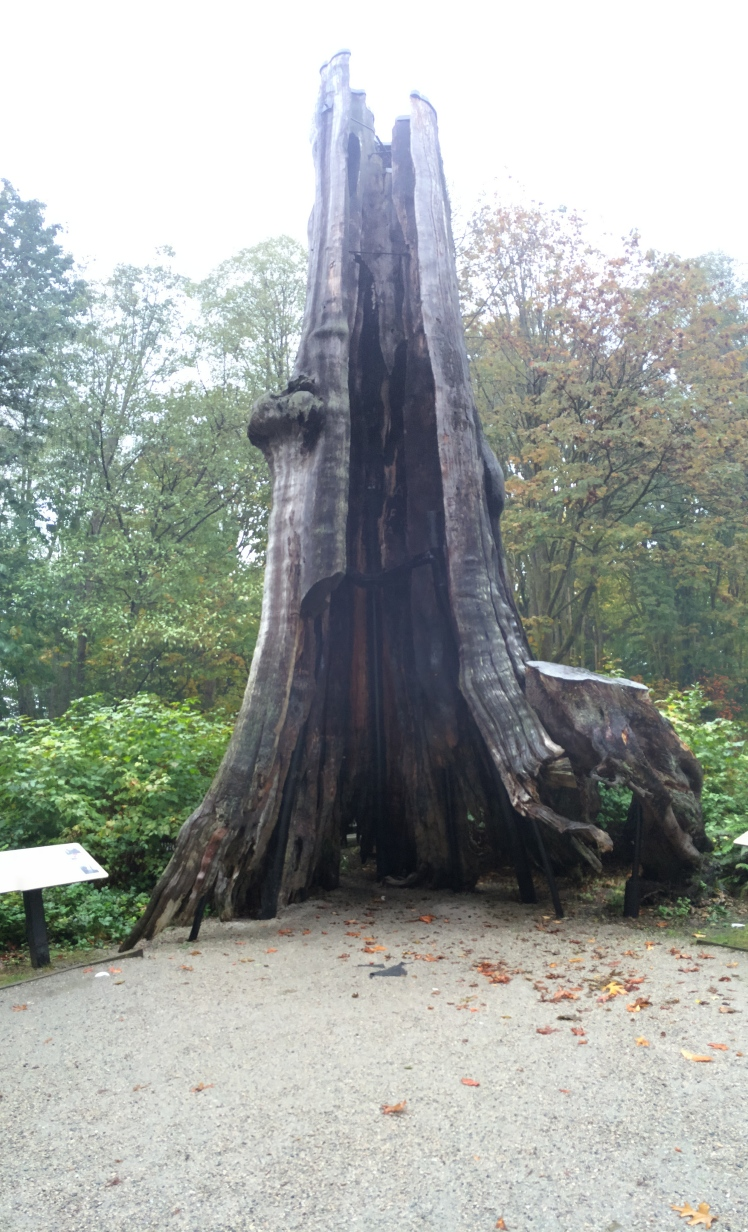 The Hollow Tree in Stanley Park