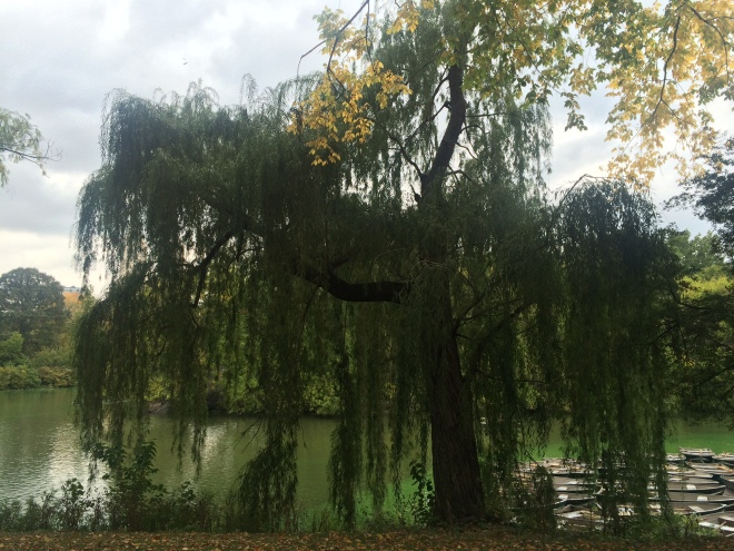 Weeping Willow at the Lake