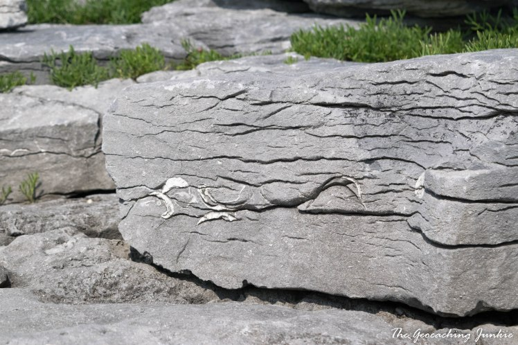 Fossils Inis Oirr-0530