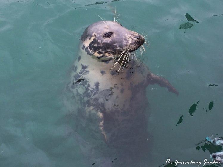 seal-3737