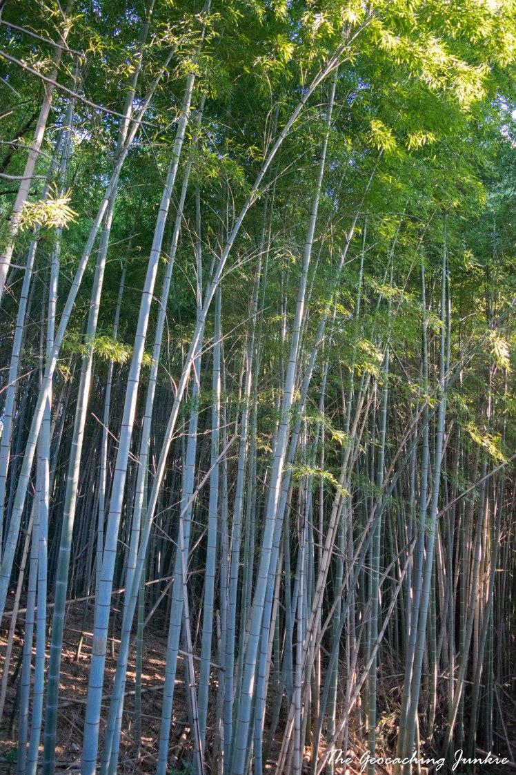 Fushimi Inari-taisha and the 10,000 Gates