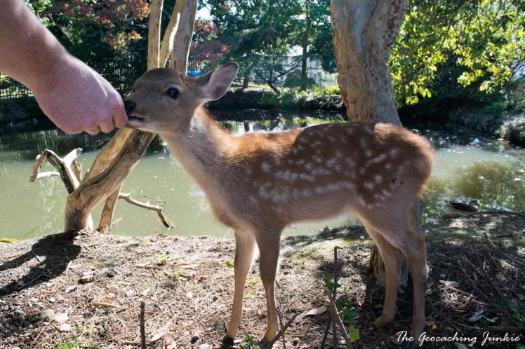 The Magic of the Ancient City of Nara