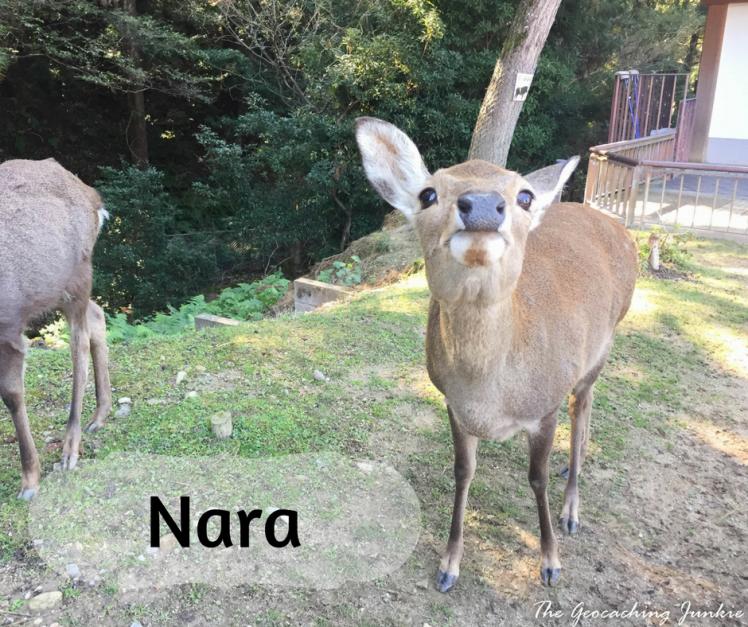 The Geocaching Junkie - Travel Nara