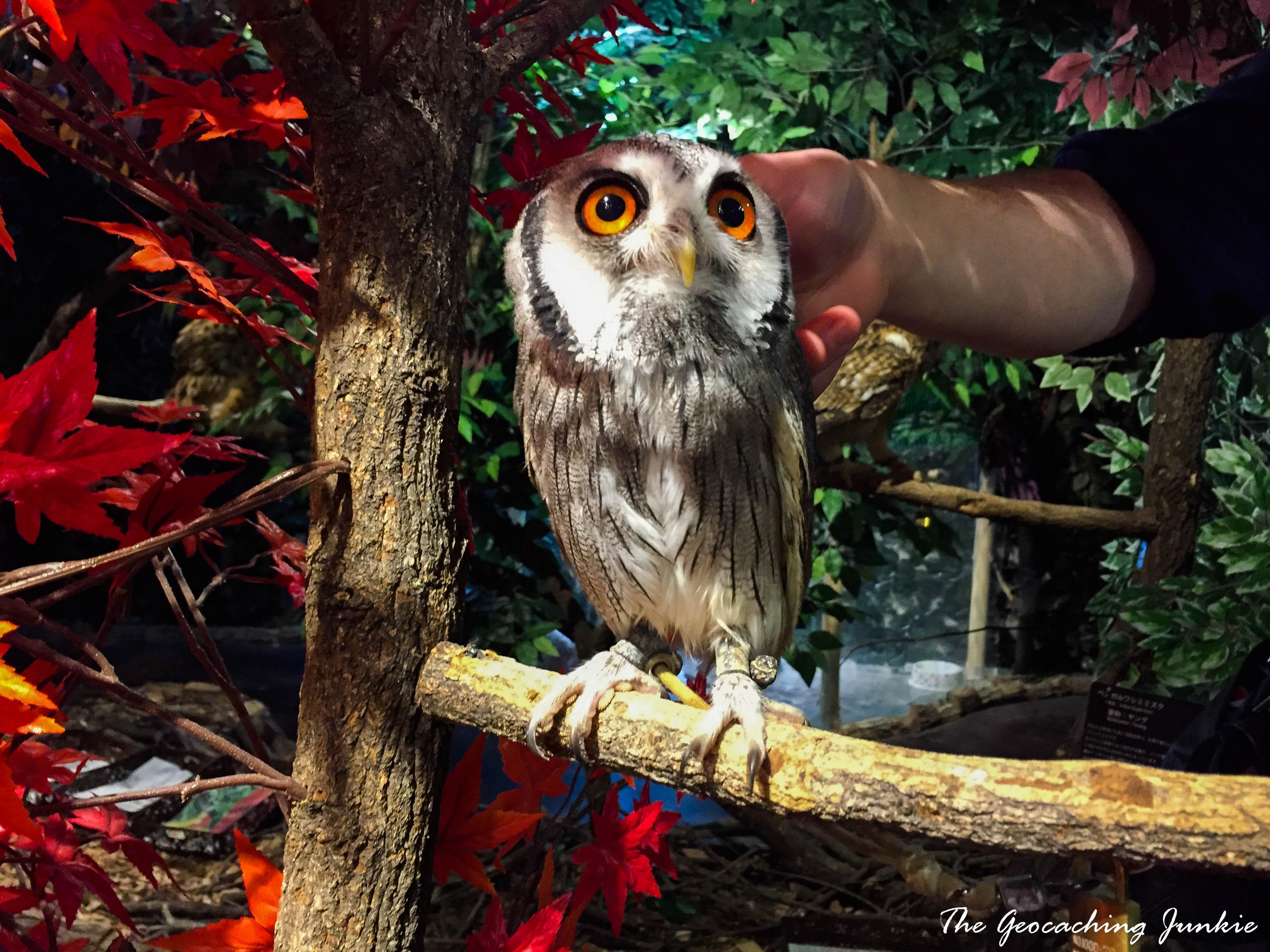 owl-forest-harajuku-4
