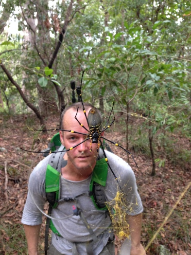 Giant Golden Orb-weaver (Nephila pilipes)