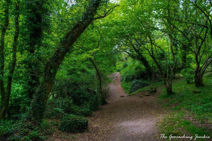 Killynether Wood_