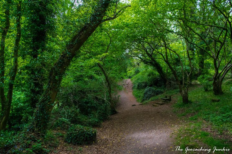 Killynether Wood_