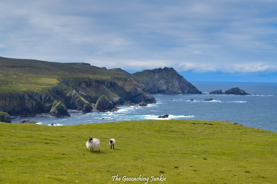 Sheep in Port, County Donegal | The Geocaching Junkie